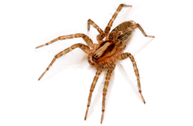 Spider Removal Portland